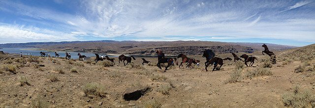 Wild Metal Horses Monument — Vantage, Washington