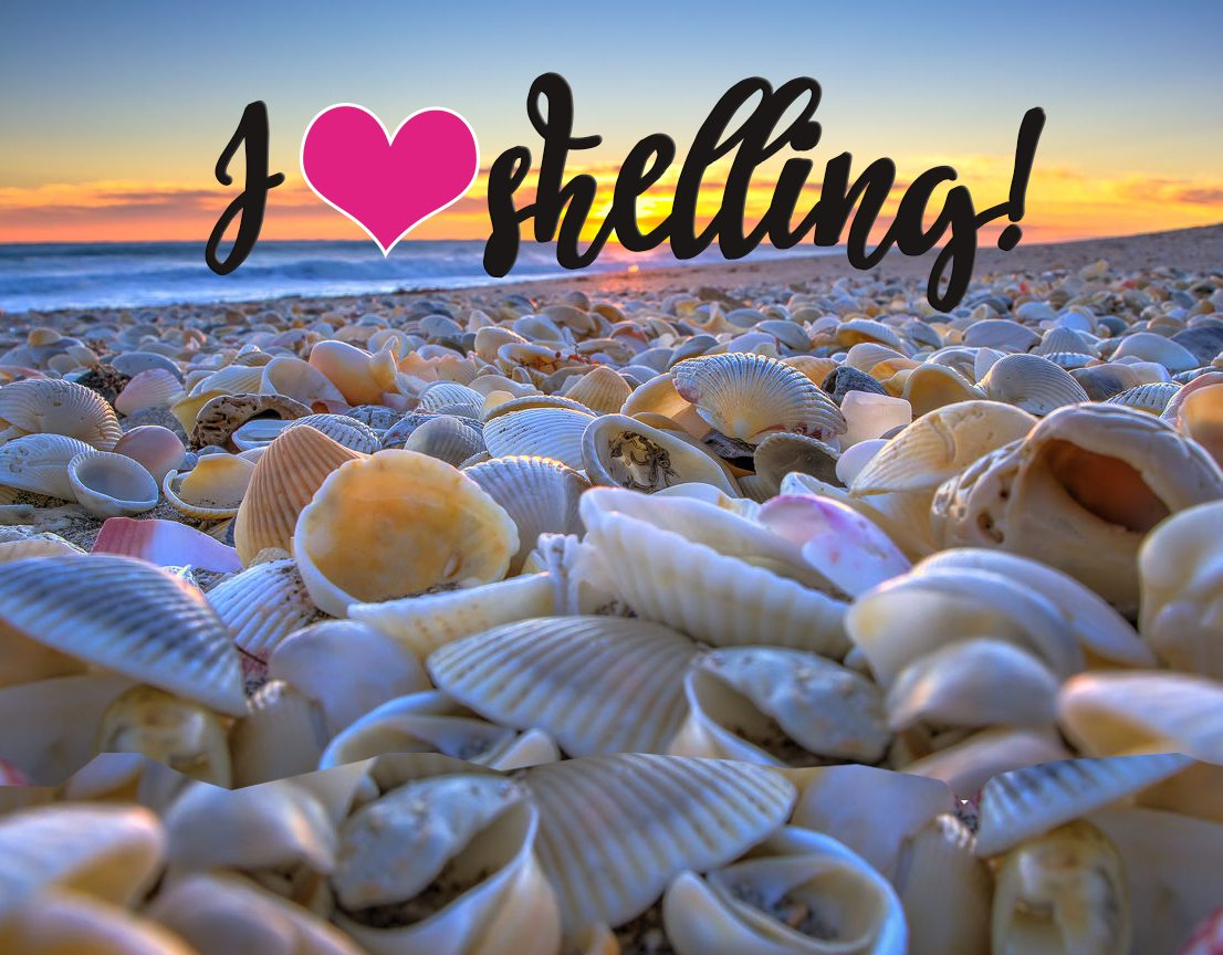 I Love Shelling! Guide to Shells Around The World